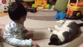 赤子vs猫