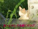 このネコ本当に野良猫・・・・野良猫シリーズ