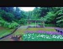 まるで「千と千尋」の世界に迷い込んだよう!しらさぎ公園の花菖蒲に魅了された件!!