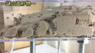 蟻戦争Ⅱ#36 500匹のアリが砂を掘ったら自然の造形美が生まれた。編