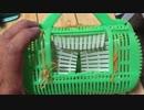 虫かごで魚を捕る仕掛けカゴを作ってみた part1