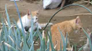 家の庭を見てたら小猫がうじゃうじゃ出て