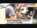 西日本豪雨災害 岡山県倉敷市で被災したペットに対する感染症予防、ストレスケアも