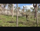オーストラリア軍の歩兵/砲兵/戦車 実弾演習(2017)