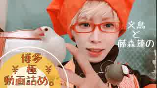 【刀剣乱舞】博多藤四郎と文鳥の動画詰め。【藤森蓮】博多藤四郎極が、ちょっと自撮りしてるまとめ。