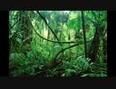 白百合の森