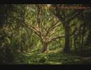 アルフレイドの森 昼