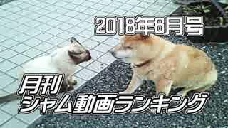 月刊シャム動画ランキング 2018年6月号