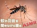 蚊の羽音を聞きながら寝よう - イヤホン推奨【ASMR】