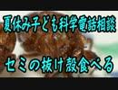 【夏休み子ども科学電話相談】のセミの抜け殻を食べてみた