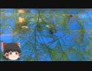 ゆっくりれいむのアクア放浪記 #42 井の頭自然文化園