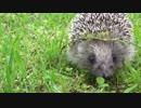 かわいい動物癒し系音楽! やさしい笛の歌 [無料BGM素材]