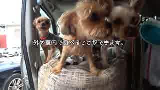 【犬車旅】軽キャンわん小旅「うどん県に