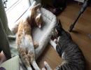 のびのび&ちゅぱちゅぱな猫