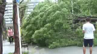 2018.9.4 台風21号の突風で公園の木が…