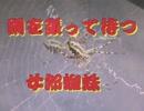 昆虫シリーズ 網を張って待つ女郎蜘蛛