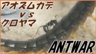 アオズムカデVS1000匹のクロヤマアリ~アリは死んでも離さない~。