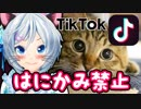 【はにかんではいけないTikTok】猫ではにかんだら即動画終了!?
