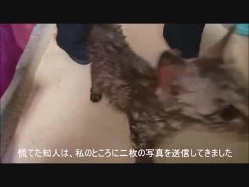 捨て猫を保護【1日目!】