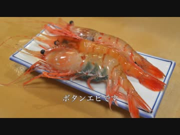 寿司職人による甘海老と牡丹海老の仕込みから握りまで〜How To Make Sushi Series〜
