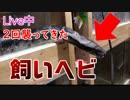 【心臓に悪いので気をつけて】【蛇って直角でも曲がれます】YouTubeのライブ中、2回飛んできたブラッドパイソン