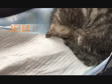 捨て猫を保護【3日目!】