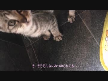 保護猫の生活【4日目!】