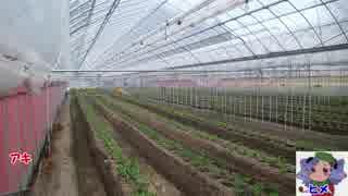 本気農業 「いちご」つくって400万稼ぐ