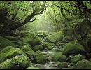 谷山浩子/森へおいで(冷たい水の中をき