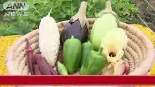 スマホで生鮮野菜を購入「農家から直売」手軽に安く