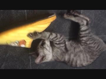 スリッパに凶暴化した猫【6日目!】