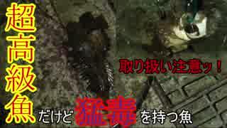 【広島爆釣伝説】超危険!!真夏の夜に現れた怖い魚=01