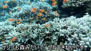 【エジプト#11】ダイバーの墓場ブルーホー
