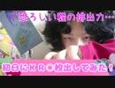 キラッとプリチャン第4弾~初日にKR○枚出してみた!~