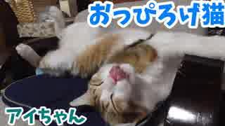 おっぴろげ猫アイちゃん