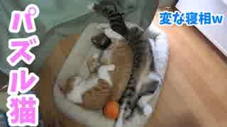 パズルのピースみたいにハマっちゃう猫