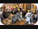 犬の集団が焼肉屋を占領!?こんな店見たことない!超インクレディブルな光景。