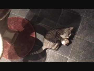 猫のぬいぐるみ上げてみた【14日目!】