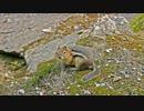Close-Up Photo Of A Squirrel 鎌田節子
