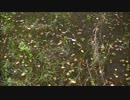 房総 秋の水生昆虫