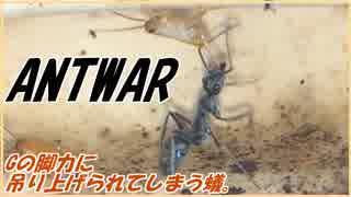 逃げに特化したゴキブリと狩りに特化したアリ~生物の極致点~。