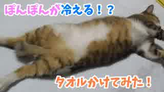 猫のぽんぽんが冷えるのでタオル掛けてみ