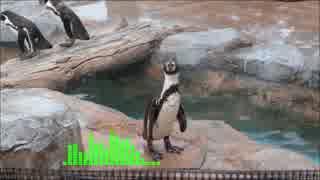 純情フリッパー-FF4 Sound Arrange-