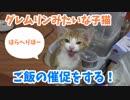 グレムリンのような子猫イナリ君、ご飯の催促をする。
