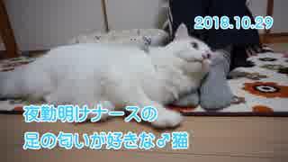【HR299】夜勤明けナースの足のニオイが好きな♂猫