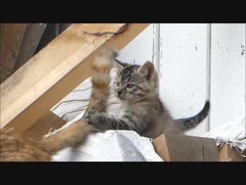 野良猫の赤ちゃんが1か月後にとんでもない状態にwww