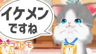 ネコからのイケメン認定で満足する男!#02