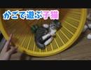 カゴで子猫がわちゃわちゃ遊ぶ!