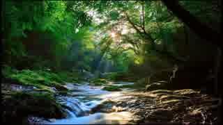 【癒し】カッコウの鳴き声と渓流のせせら