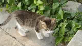 何かを合図する子猫について行ったら意外